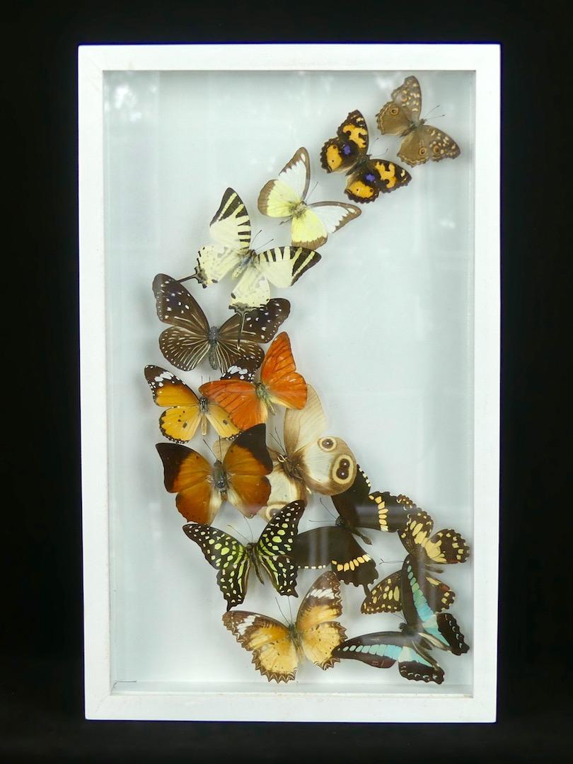 cadre de 14 papillons sous verre boutique oviry. Black Bedroom Furniture Sets. Home Design Ideas