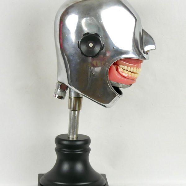 Crâne d'étude (profil)
