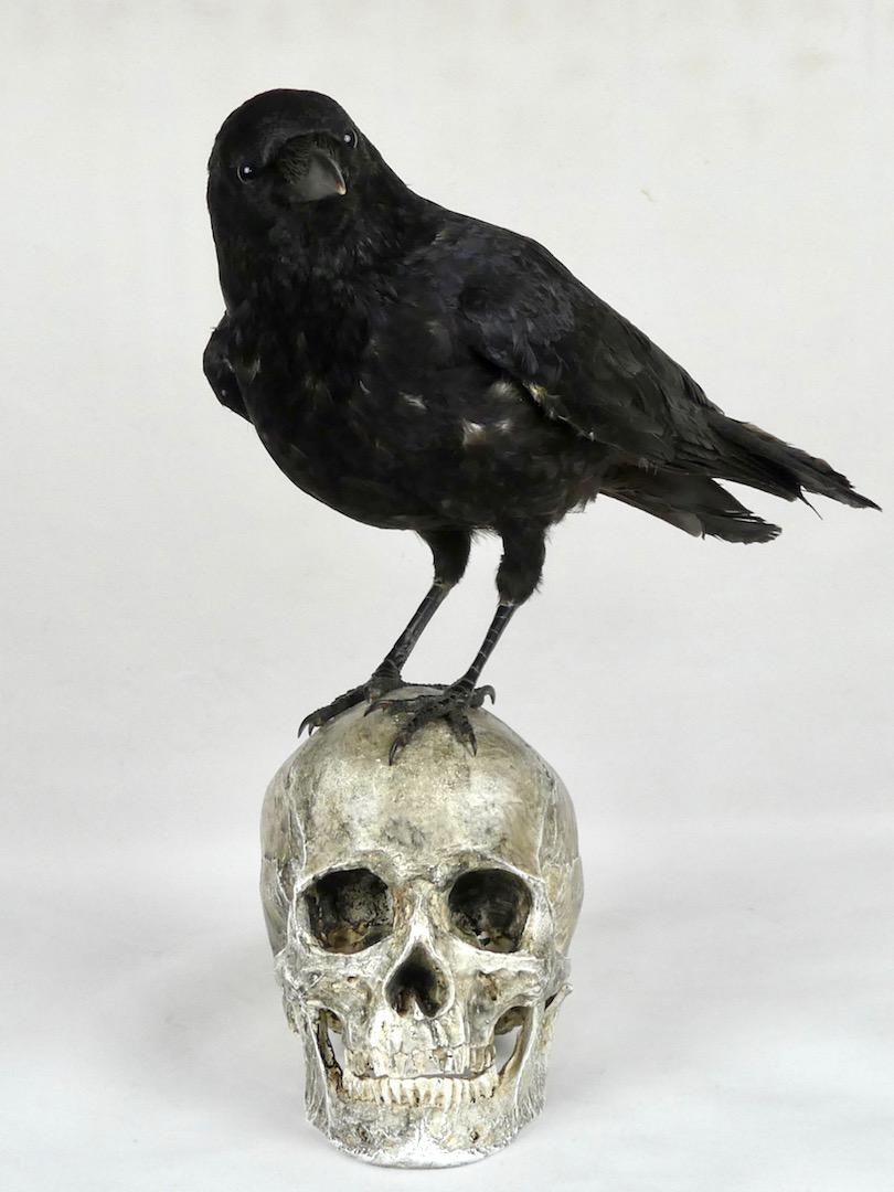 Corbeau sur un crâne (face)